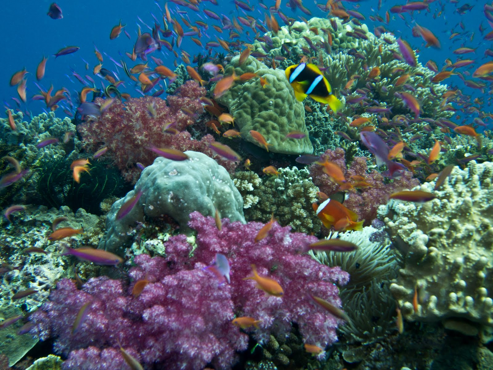 dive resort fiji