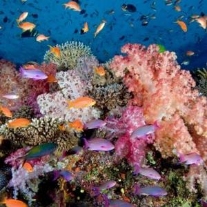 Namena Soft Corals
