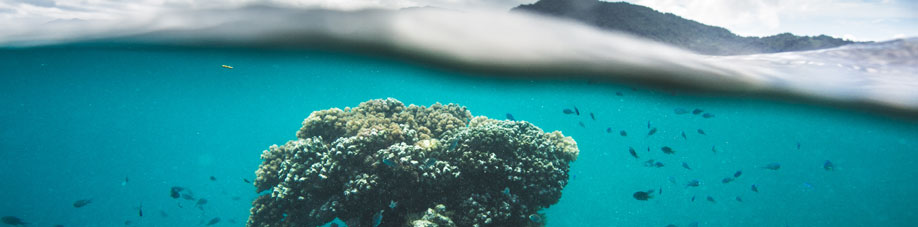 dive packages fiji
