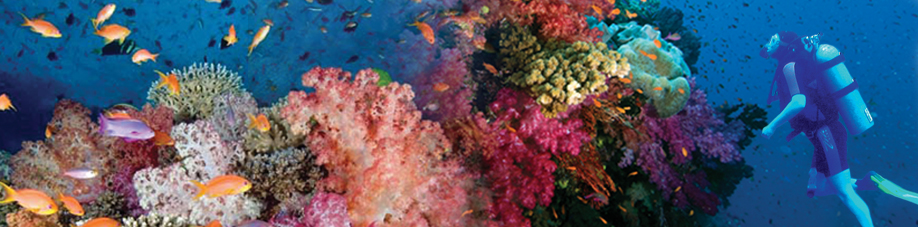 Top five dive sites savusavu